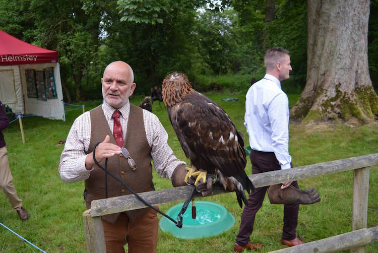Eagle falconry at British Falconry Fair