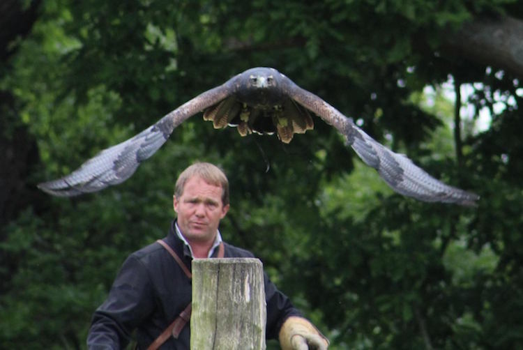 "Charlie Heap and ""Zonda"" at British Falconry Fair"