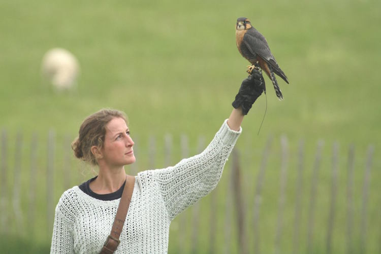 Nathalie Denolf at British Falconry Fair